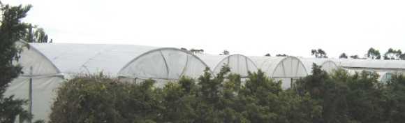 market sheds
