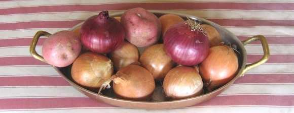 photograph of onions